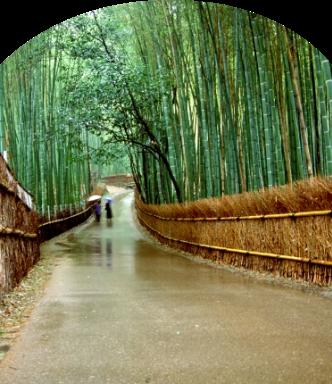 嵐山スマホ用画像