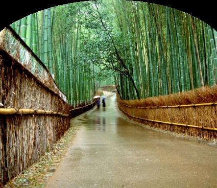 嵐山パソコン用画像