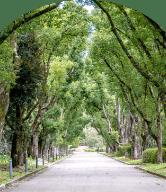自然公園スマホ用画像