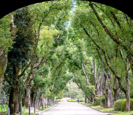 自然公園パソコン用画像